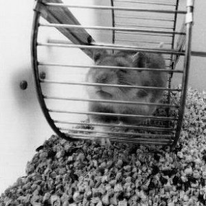 El hamster atrapado en la rueda